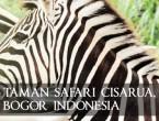 Taman safari cisarua bogor