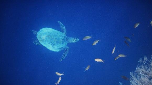 Fenomena Hantu Laut Raja Ampat