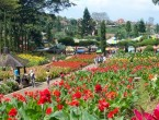 Wisata Kota Bunga Tomohon