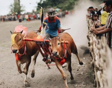 wisata-budaya-kerapan-sapi