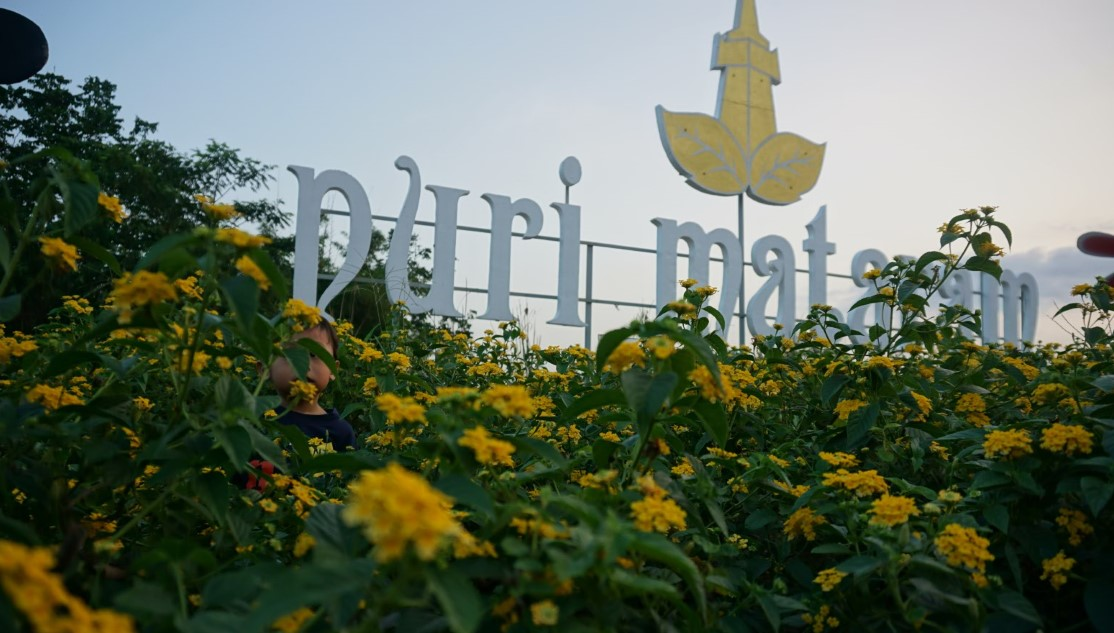 Taman Bunga Celosia dan Alamanda di Yogyakarta