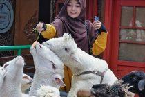 Kebun Binatang Farmhouse Susu Lembang