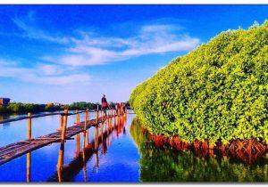 Menikmati Eksotisme Hutan Mangrove Kulon Progo